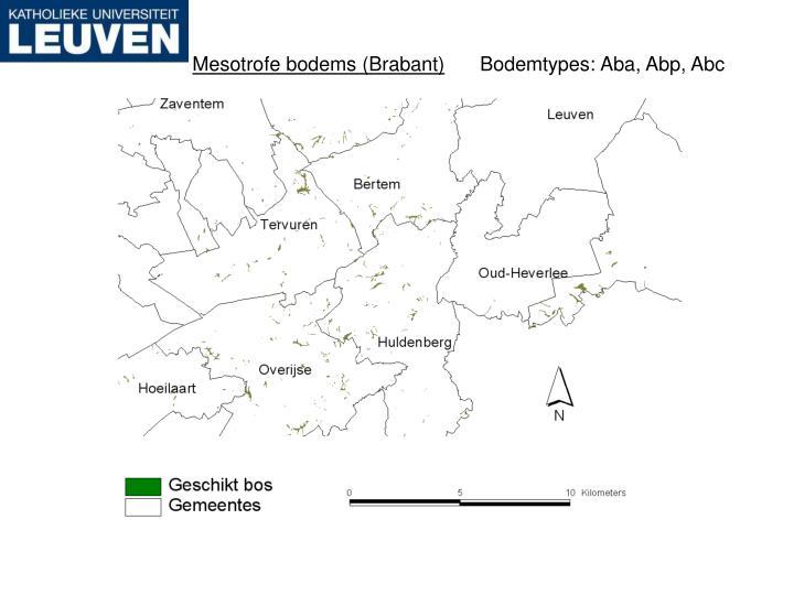Mesotrofe bodems (Brabant)