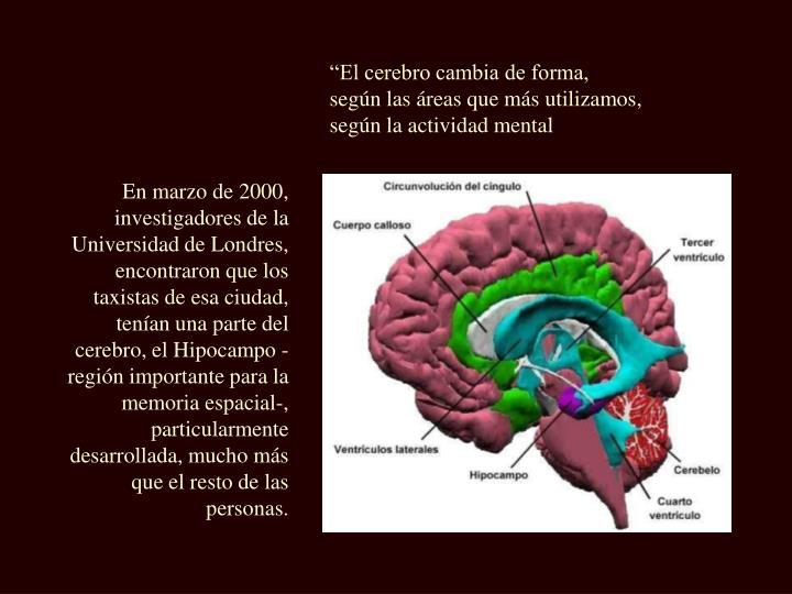 """""""El cerebro cambia de forma,"""