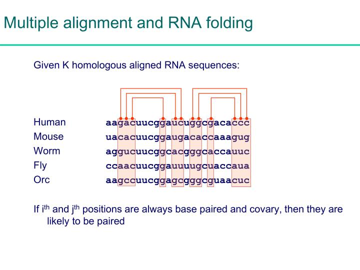 Multiple alignment and RNA folding
