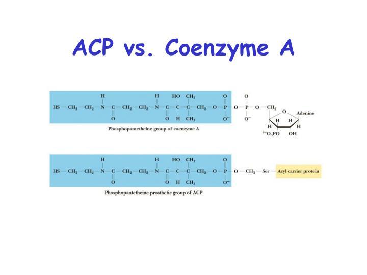ACP vs. Coenzyme A
