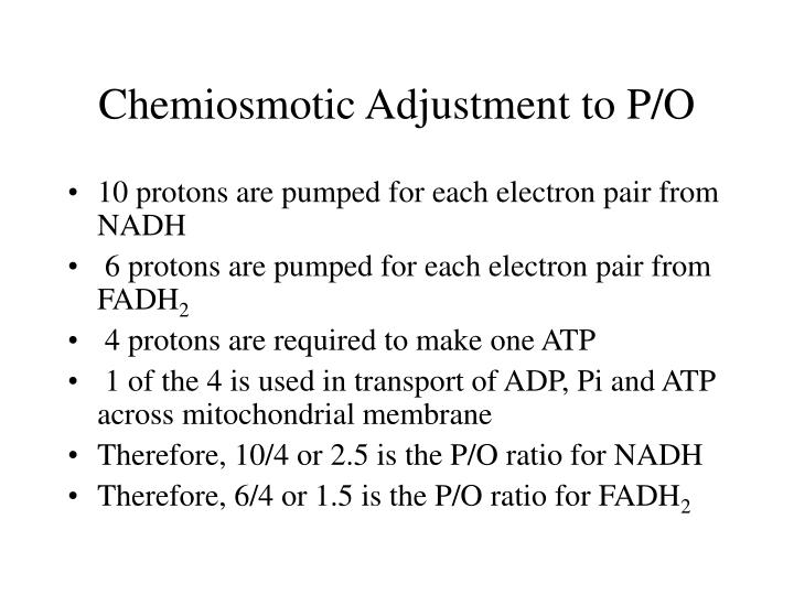 Chemiosmotic Adjustment to P/O