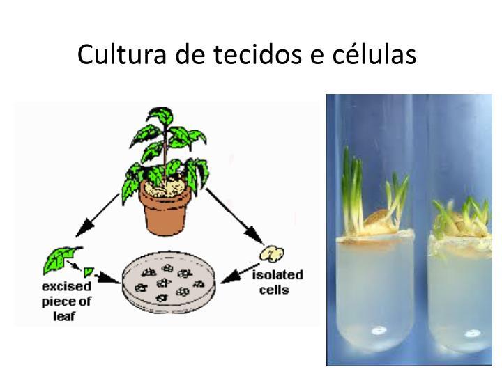 Cultura de tecidos e células