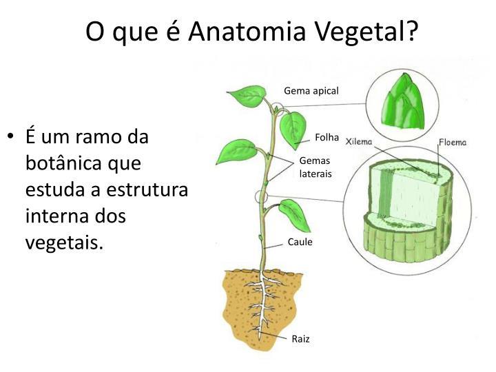O que é Anatomia Vegetal?