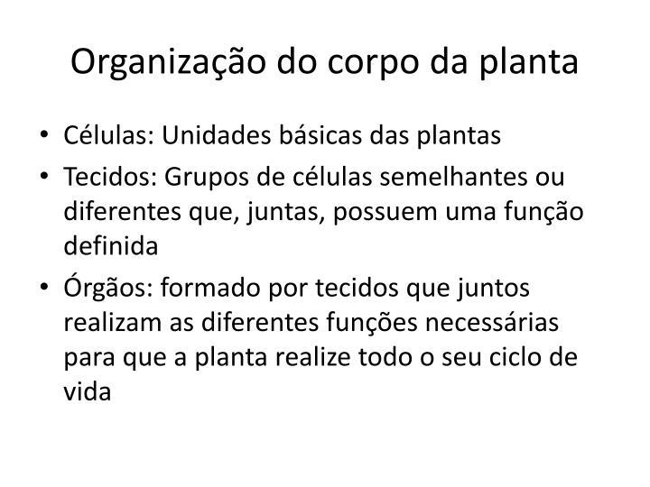 Organização do corpo da planta