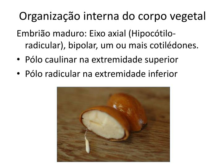 Organização interna do corpo vegetal