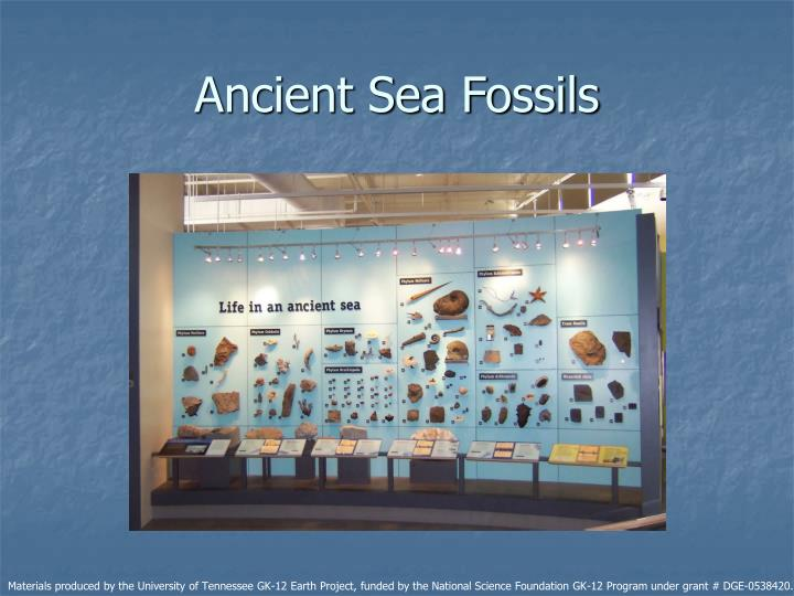 Ancient Sea Fossils