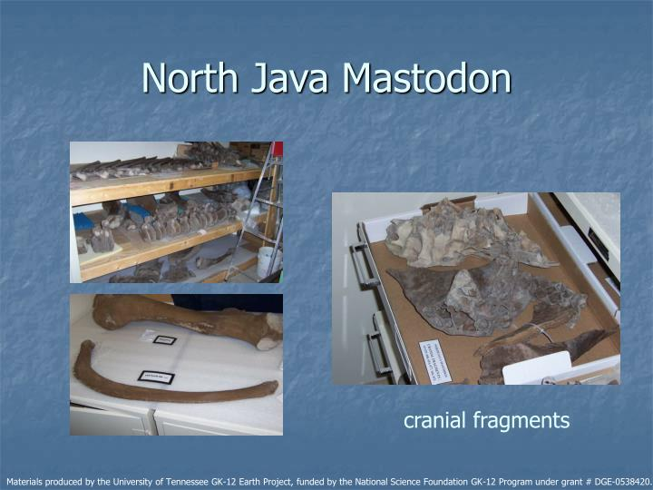 North Java Mastodon