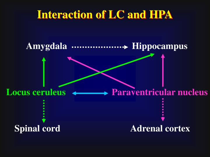 Interaction of LC and HPA