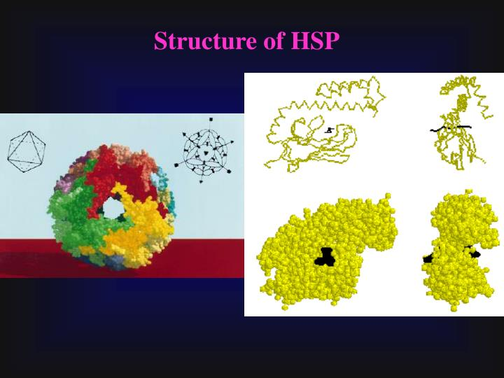 Structure of HSP