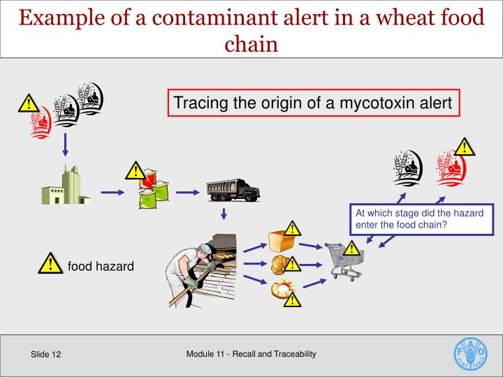 Example of a contaminant alert in a wheat food chain