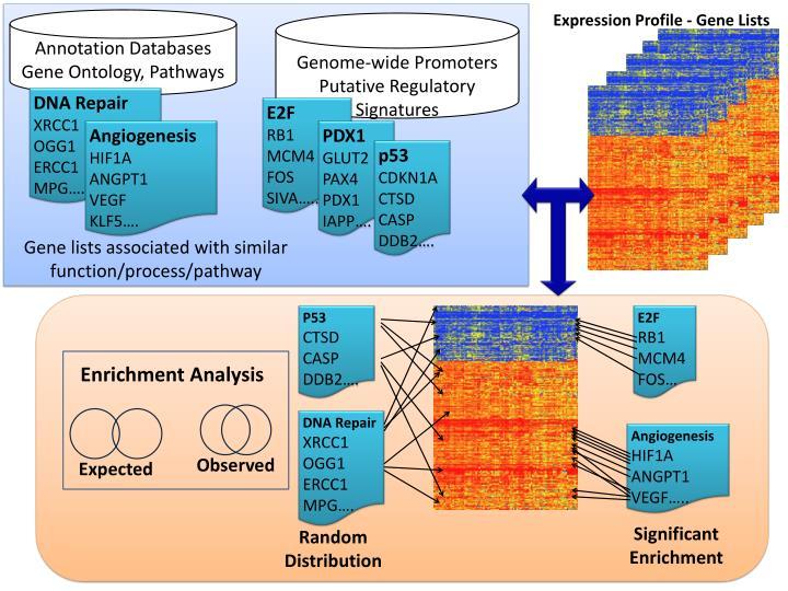 Expression Profile - Gene Lists