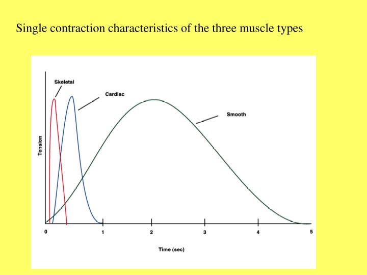 Single contraction characteristics of the three muscle types