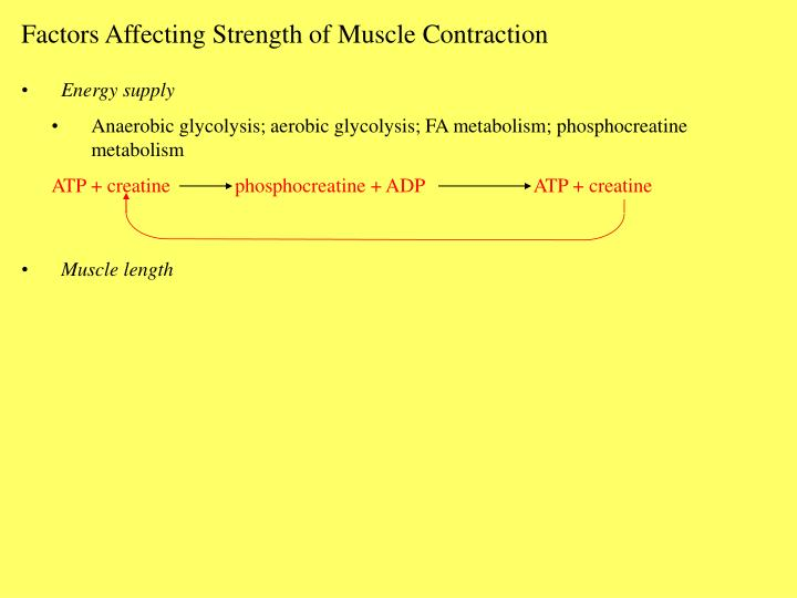 Factors Affecting Strength of Muscle Contraction