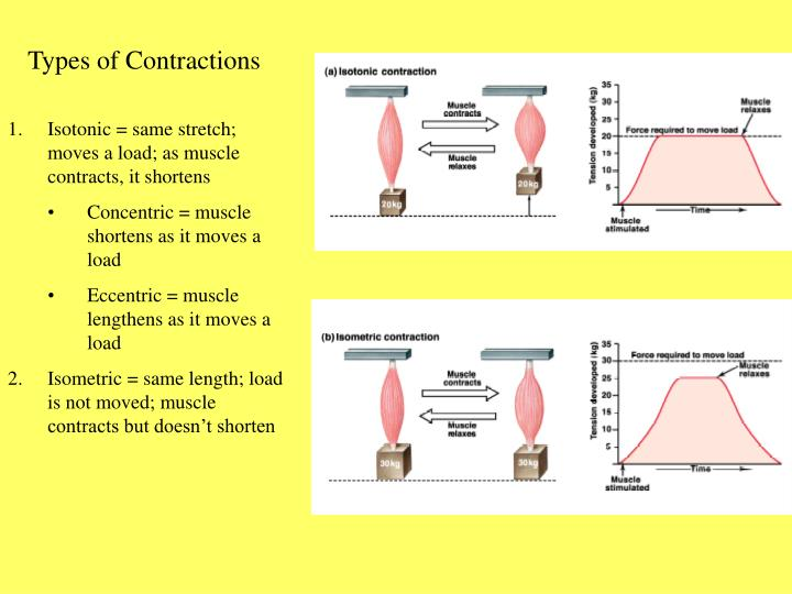 Types of Contractions