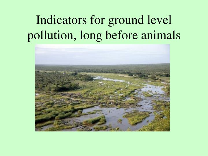 Indicators for ground level pollution, long before animals