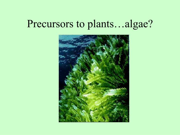 Precursors to plants…algae?