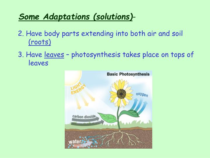 Some Adaptations (solutions)