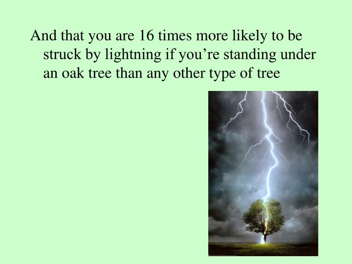 And that you are 16 times more likely to be struck by lightning if you're standing under an oak tree than any other type of tree