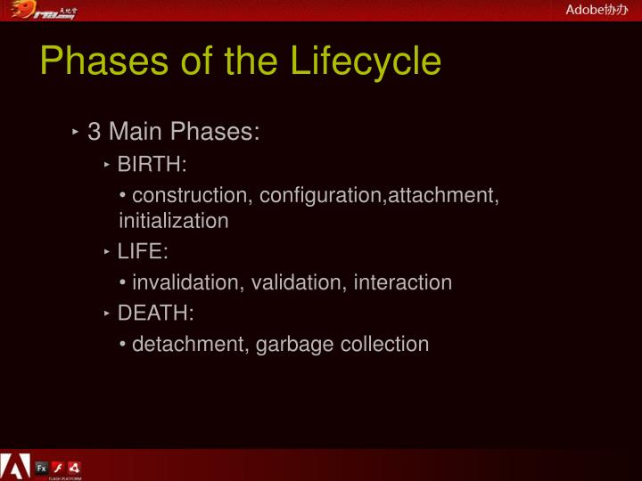 Phases of the Lifecycle