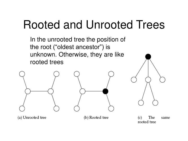 Rooted and Unrooted Trees