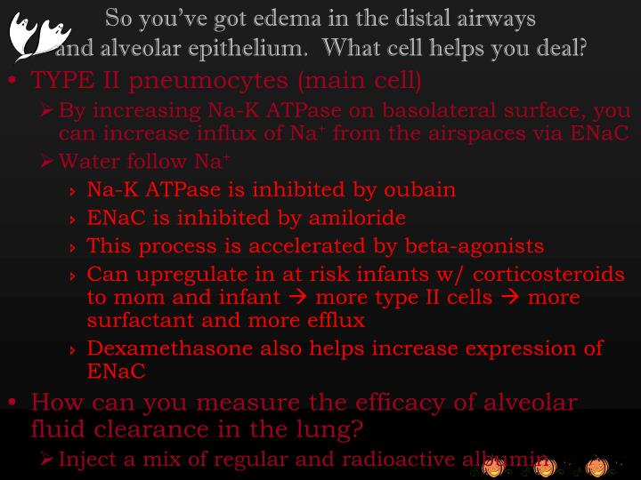 So you've got edema in the distal airways
