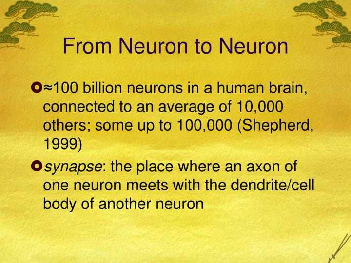 From Neuron to Neuron