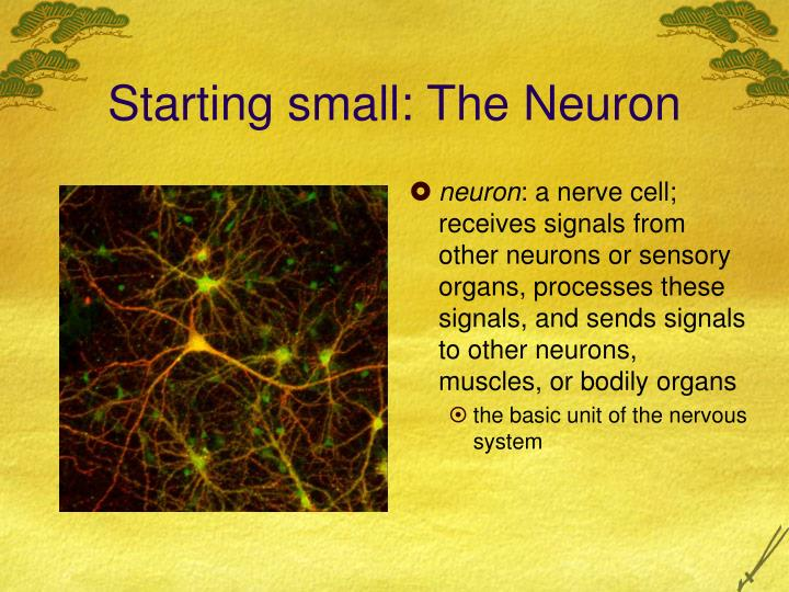 Starting small the neuron