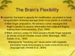 the brain s flexibility