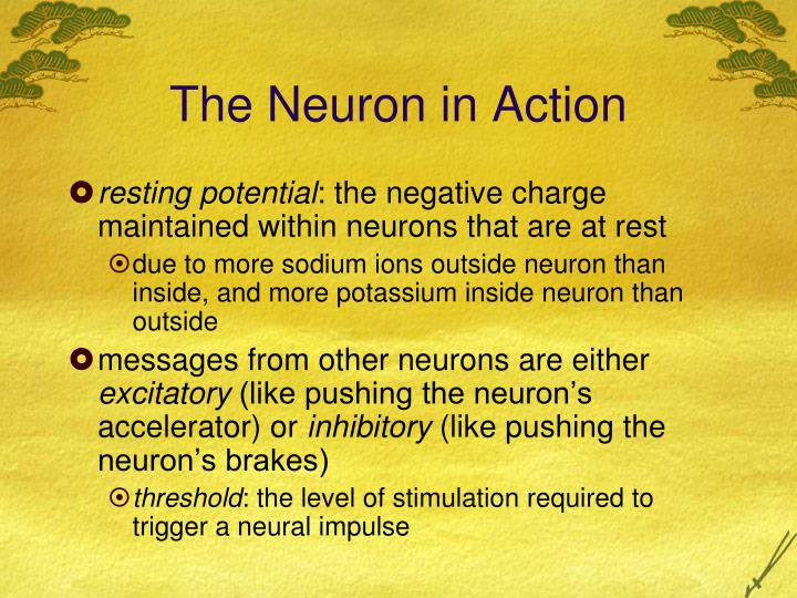 The Neuron in Action