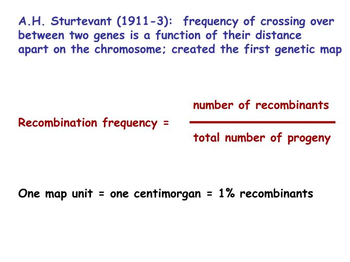 A.H. Sturtevant (1911-3):  frequency of crossing over