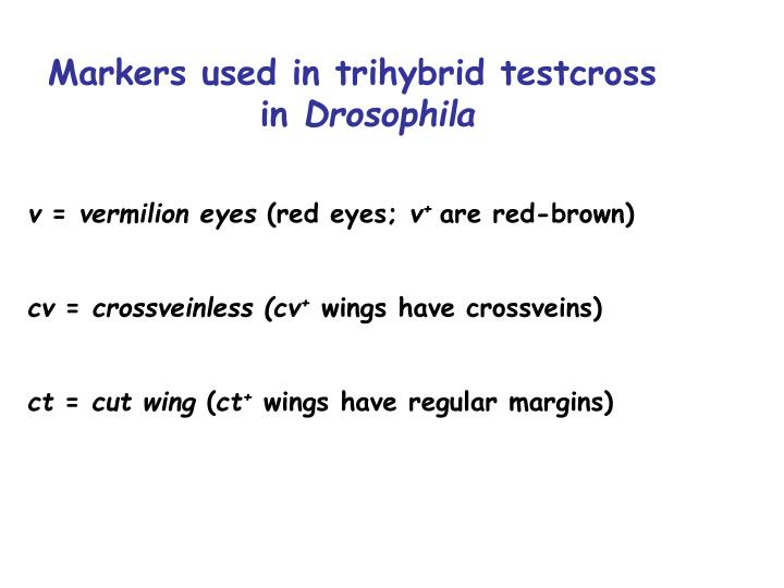 Markers used in trihybrid testcross