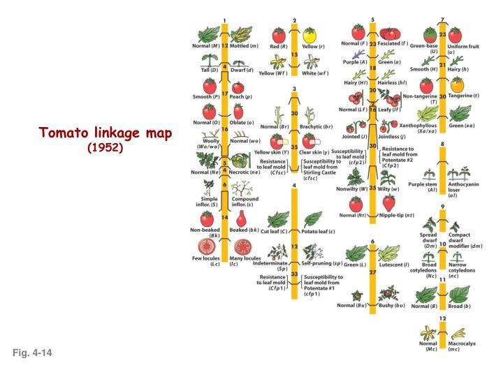 Tomato linkage map