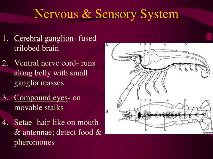 Nervous & Sensory System