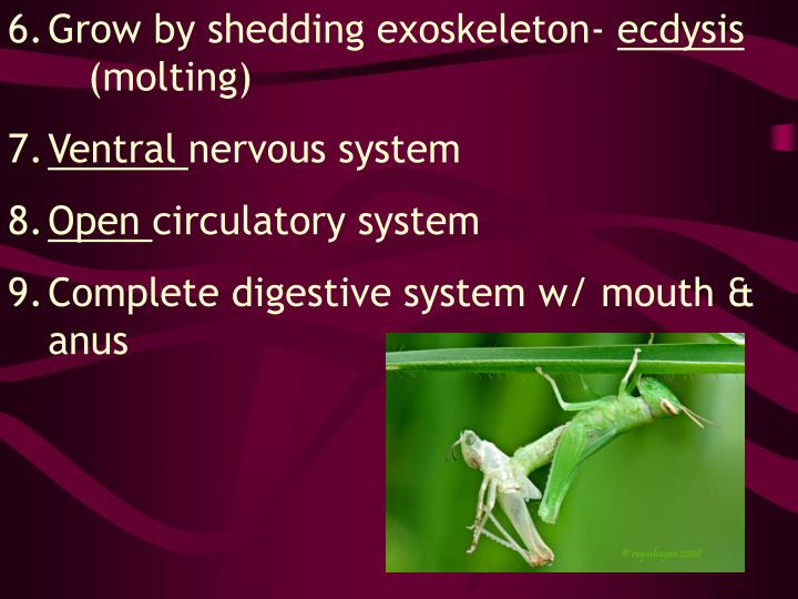 Grow by shedding exoskeleton-