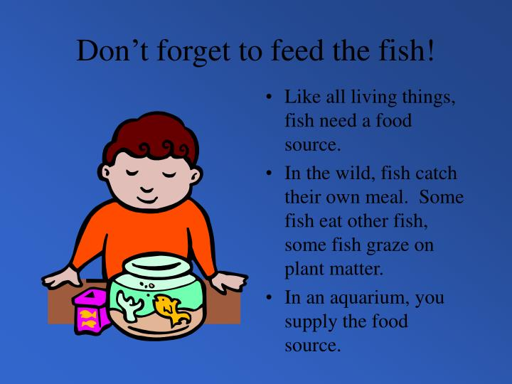 Don't forget to feed the fish!