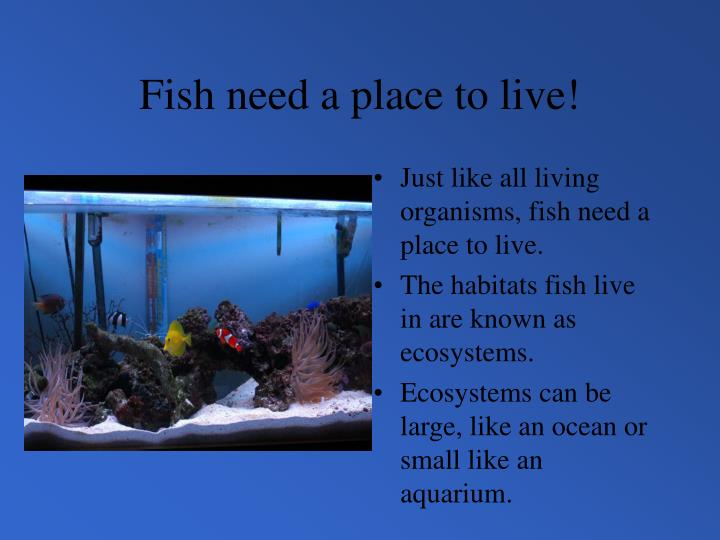 Fish need a place to live!