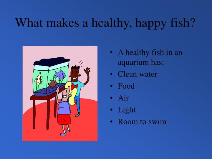What makes a healthy, happy fish?