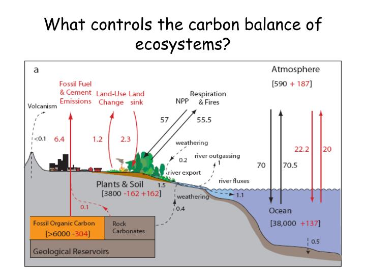 What controls the carbon balance of ecosystems?