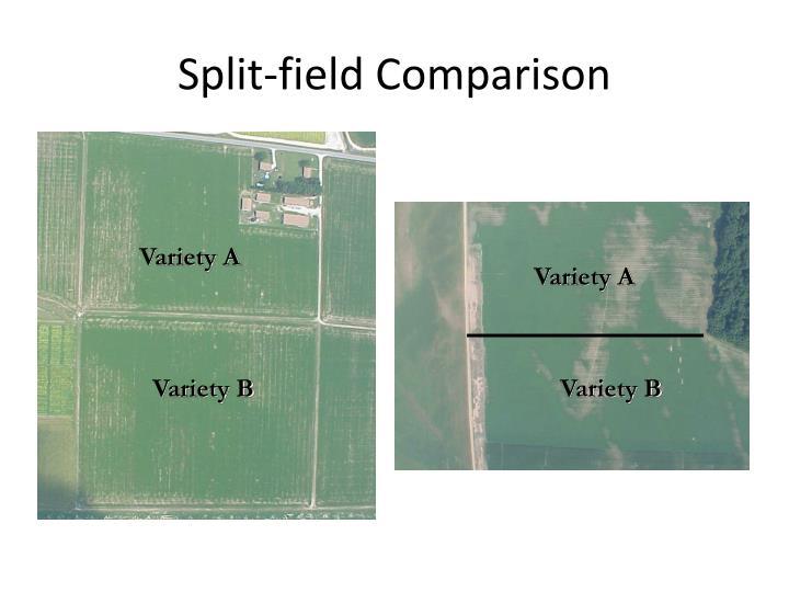 Split-field Comparison