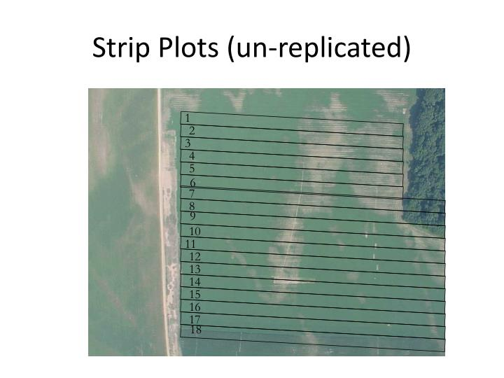 Strip Plots (un-replicated)