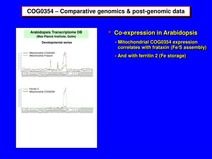 Mitochondrial COG0354