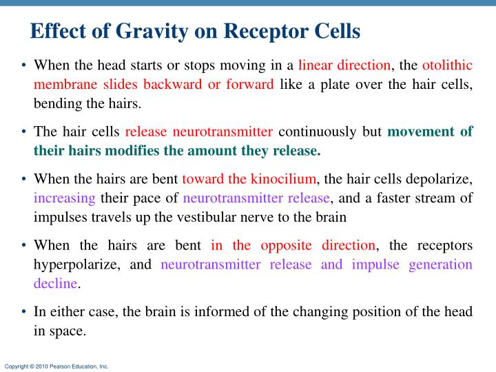 Effect of Gravity on Receptor Cells