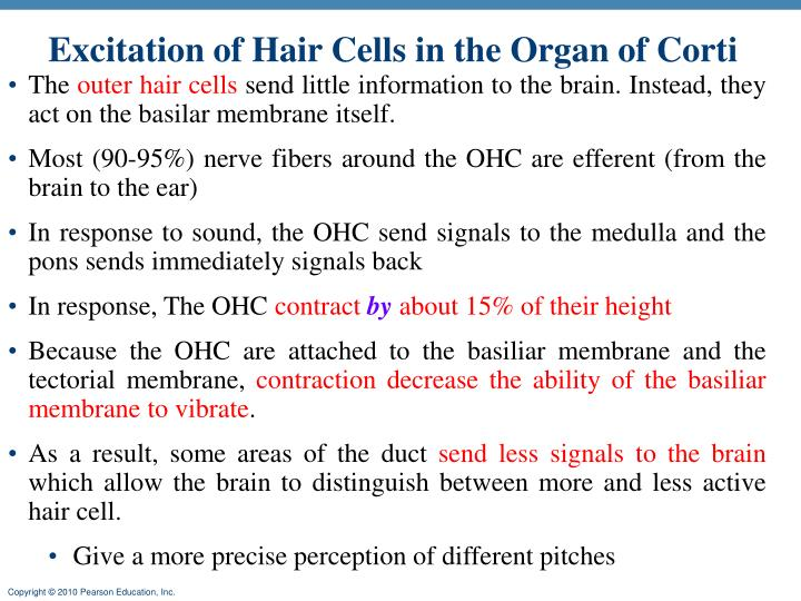 Excitation of Hair Cells in the Organ of Corti