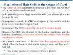 excitation of hair cells in the organ of corti1