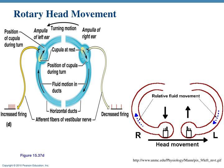 Rotary Head Movement