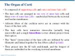 the organ of corti