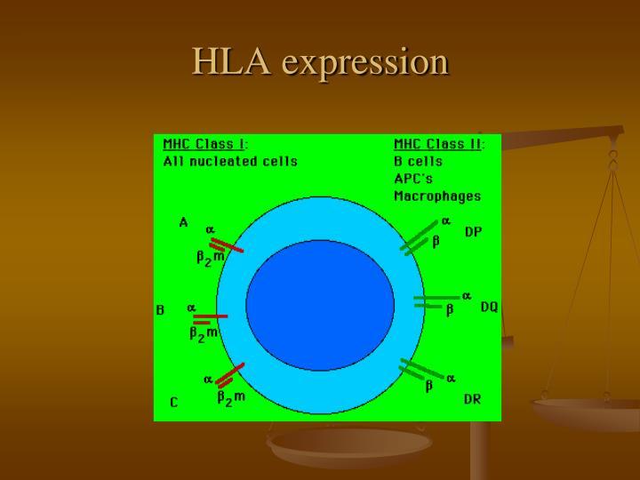 HLA expression