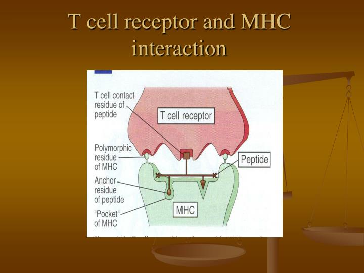 T cell receptor and MHC interaction