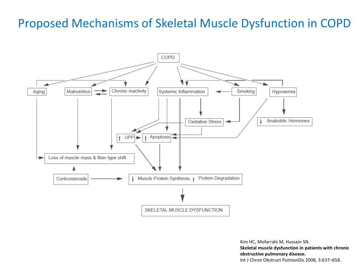 Proposed Mechanisms of Skeletal Muscle Dysfunction in COPD