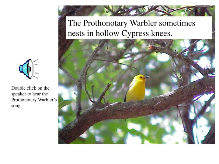 The Prothonotary Warbler sometimes nests in hollow Cypress knees.